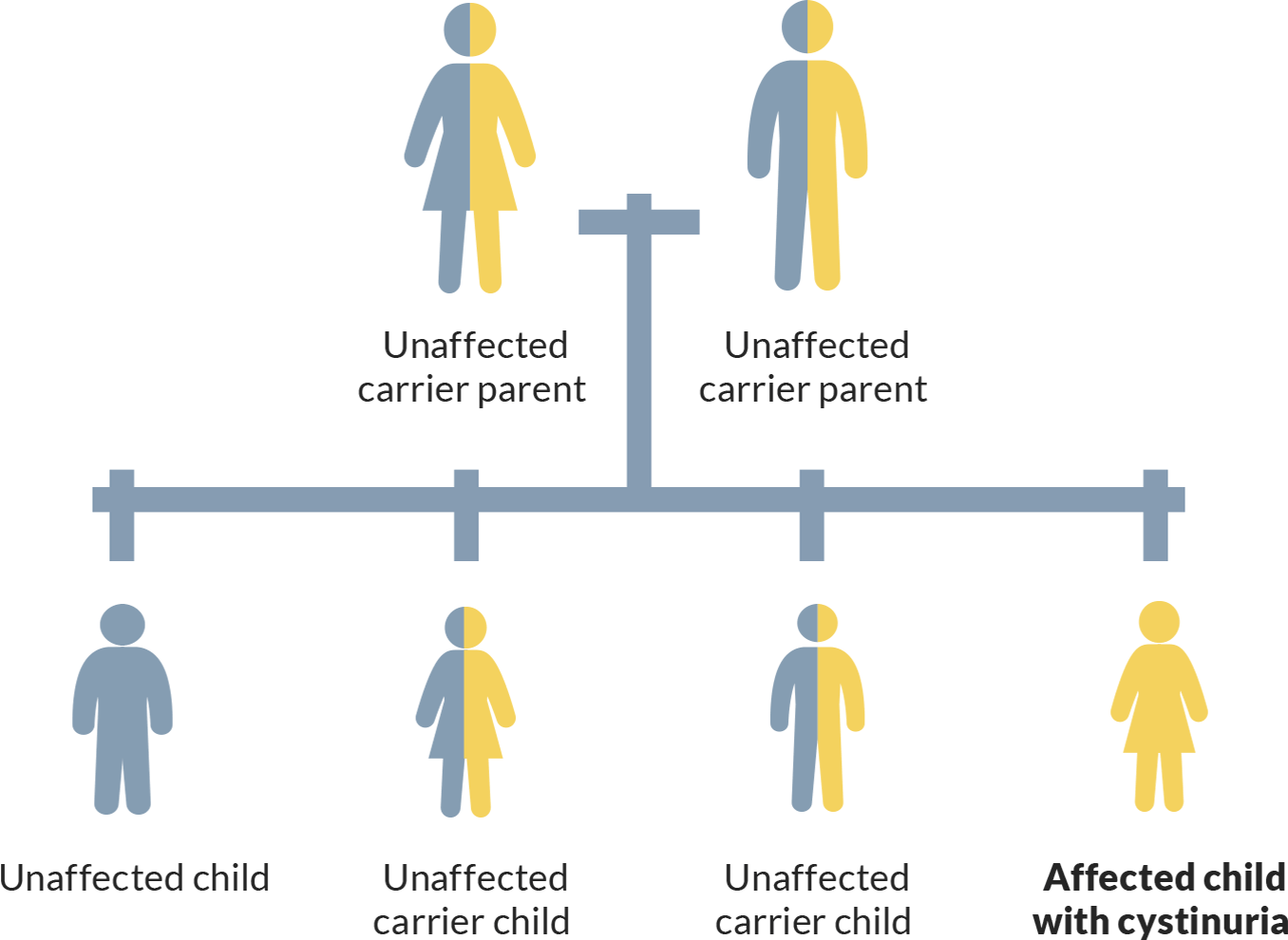 Picture showing how a person with cystinuria inherited 2 abnormal genes—1 from each parent.